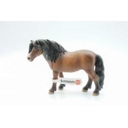 Dartmoor Pony Stute