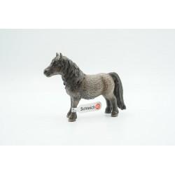 Shetland Pony Wallach